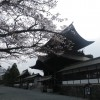 桜の咲き具合を確かめに、阿蘇神社へちょっと行ってみました。
