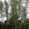 竹林がスッキリしました。