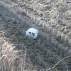 田んぼの中に猫一匹。
