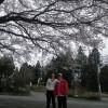 チーさん、ミユと阿蘇少年少女合唱団の定期演奏会に行ってきました。帰りに花見もしてきました。