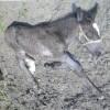 母親の足元で眠る仔馬