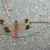 生き物たちも、コンクリやアルミの中で暑そうでした。