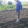 高菜植えとジャガイモ畑の土かぶせをしました。トンボもたくさん飛んでいました。