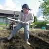 サトイモ植えをしました。鍬さばきももだんだんと上手になりました。