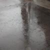 今日は猫も雨宿りをしていました。