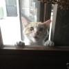 猫も挨拶しにきてくれました。
