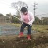 ジャガイモ植えもしました。
