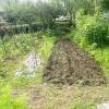 みんなで涼しいうちに農園の草取りをしました。 ユウコさんんはこんにゃくが気に入ったようです。