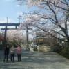 パンの配達の途中で、阿蘇神社と仲町通りの桜並木を歩いてみました。