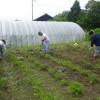 パン作りが終わってから、農園のジャガイモ畑の追肥や土かぶせをしました。