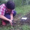 今日はお好み焼きをしてみました。午後はニンニク植えをしました。