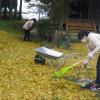宮本がメンバーから誕生日のプレゼントをもらいました。ホッカイロ、ありがたい限りです。お薬師様の枯れ葉掃きもいよいよ大詰め、大イチョウの木からすべて落ちきり、皆で綺麗にしました。