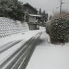またまた雪です。