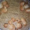一の宮小学校からパン作り体験と交流学習に来てくれました。今年3回目です。メンバーたちもしっかり教えてあげていました。