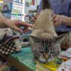 若いメンバーたちは食欲モリモリです。トマトもどんどん大きくなってきました。松谷文華堂さんの『店長』ネコさんにも会ってきました。