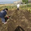 パン作りの合間に農園の野菜作りにも汗を流しました。