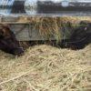 生前大変お世話になった竹原幸範さんやお隣の農場の牛にも挨拶しました。