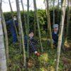 今日は竹林や垣根をきれいにしました。今日は雨です。皆で活動しています。